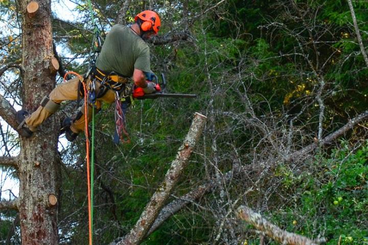 emergency-tree-removal-service