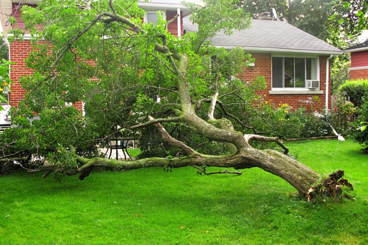 emergency-tree-services
