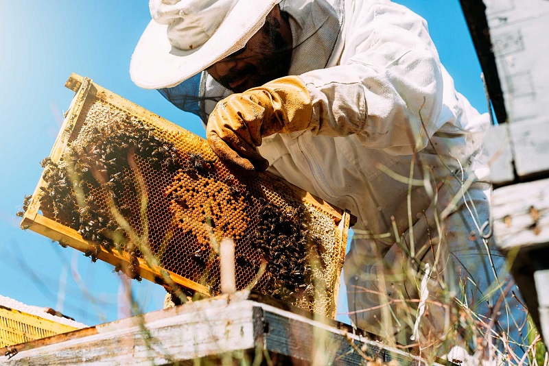 Close up picture of bees keeper