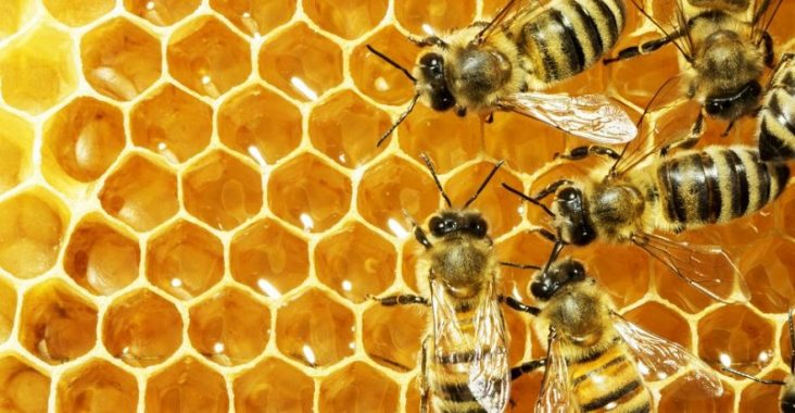 close up picture of bees