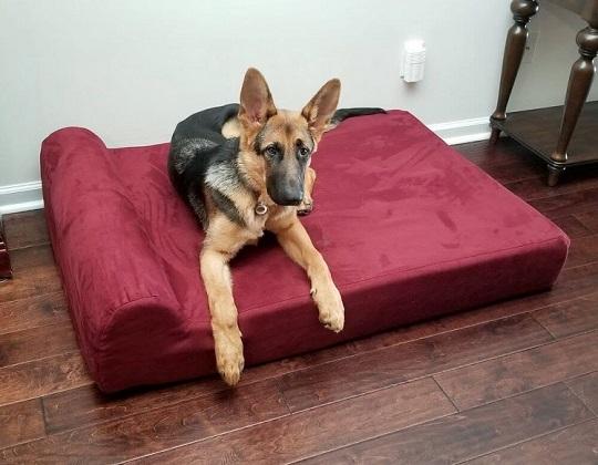 German Shepherd sleeping on orthopedic dog bed