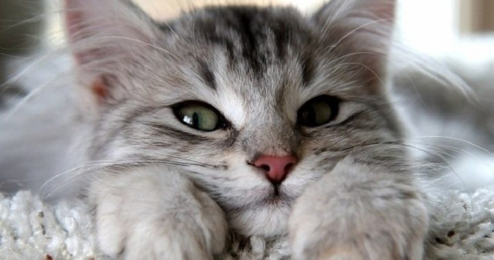 5 Essential Supplies to Get Before You Adopt a Cat