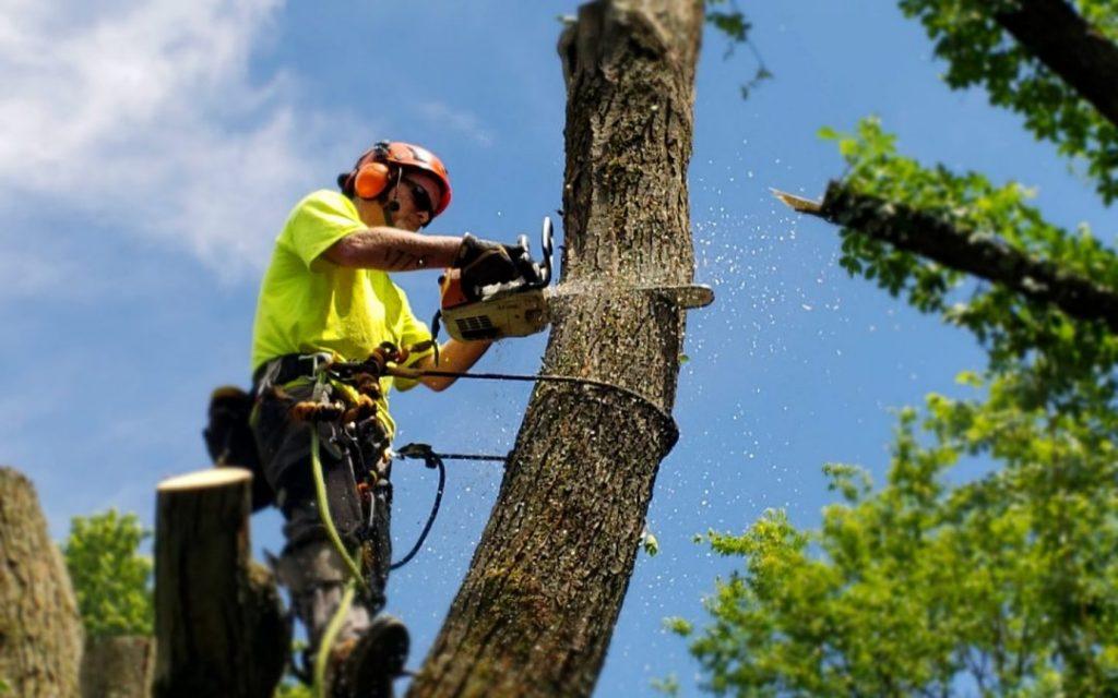 man removing a tree